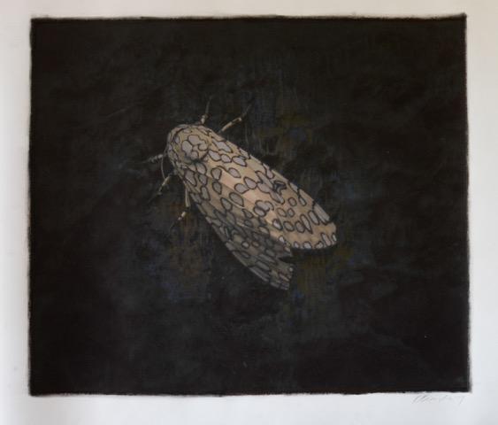 Brickworks Gallery Leopard Moth Photo