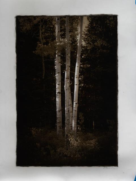 Brickworks Gallery Tree Photo