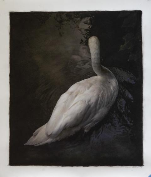 Brickworks Gallery Swan Photo