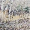 Aspens-March Afternoon