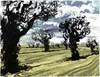 Wild Trees (5/60)