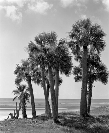 Beach Front Palmettos