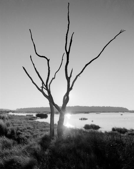 Backlit Tree in Basin