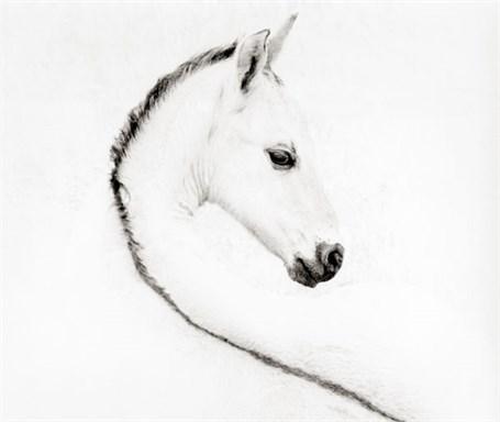 The Foal - Framed 36
