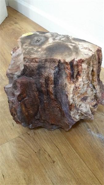 Rock Pedestal - Petrified Wood  JO#5