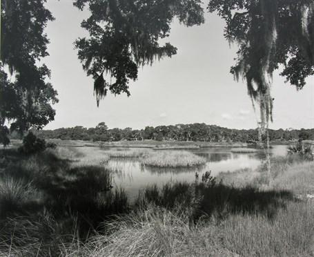 Wetland Meadow, St. Catherines Island