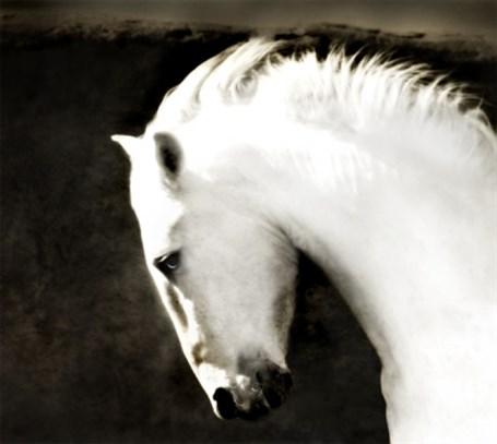 Ghost Horse - Framed 38.5