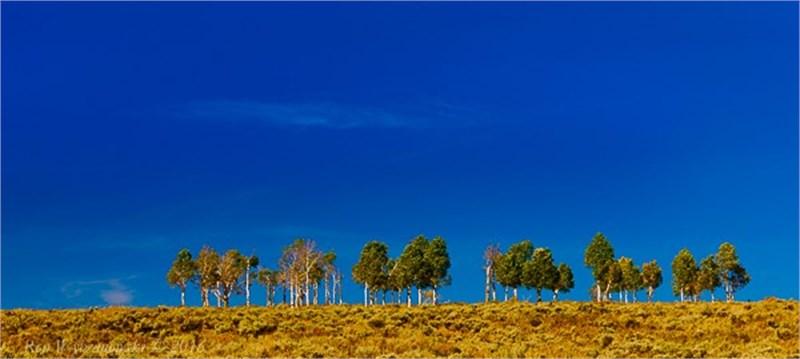 Tree Line Against Blue Sky