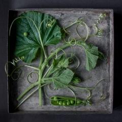 Squash Tendrils with Peas