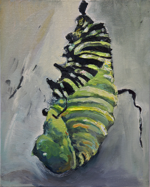 Caterpillar Metamorphosis 1